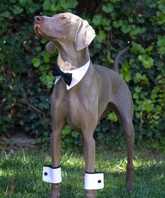 wedding dog 1