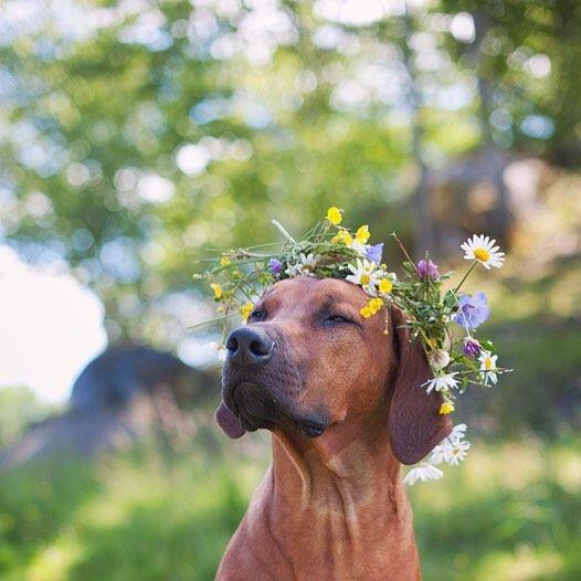 wedding dog 2
